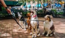 10 most pet-friendly cities in US