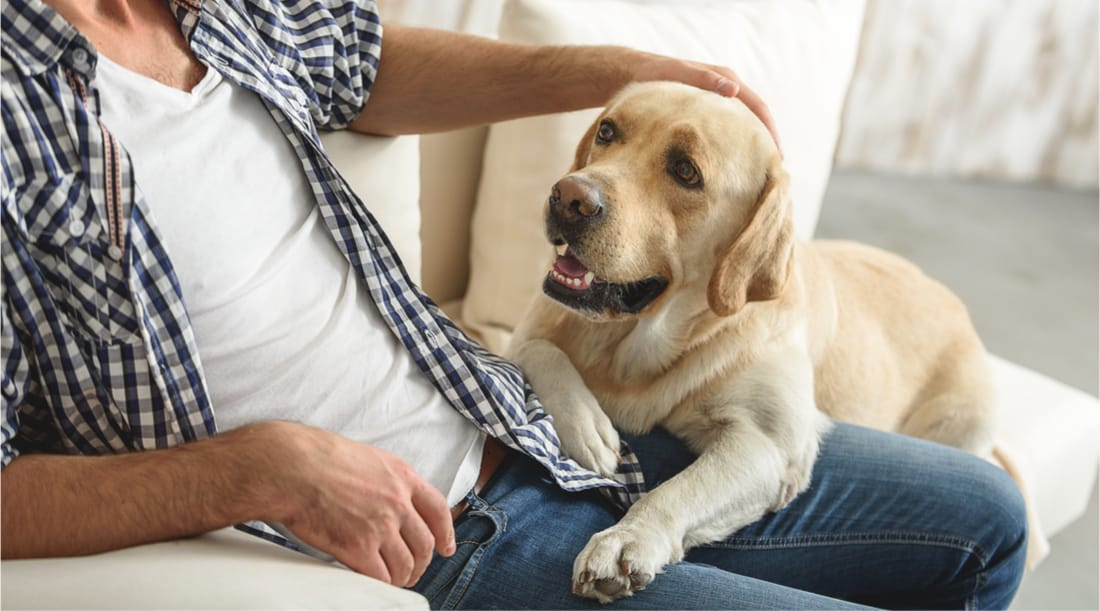 Benefits of renting out to tenants with pets