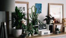 most popular house plants