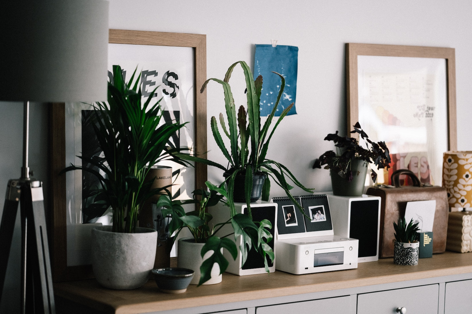 most popular house plants